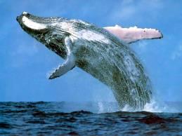 whale watching, fun