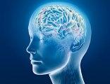brain, soul, weight