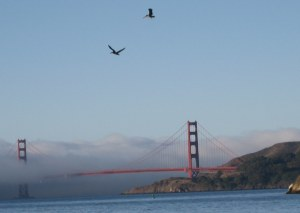 Golden Gate Bridge, pelicans, walking