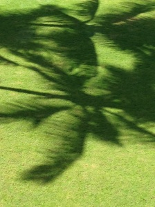 mystial, palm trees, shadow