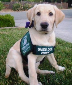 Guide Dog for the Blind, genes