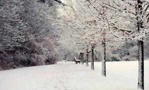 winter, wonderland, fantasy