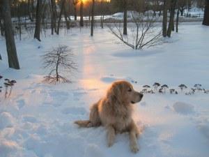 dog, love, golden retriever