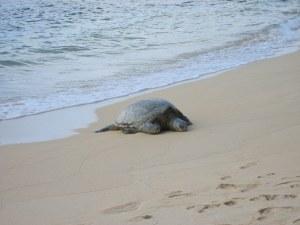 ocean, turtle, life