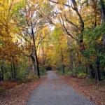 fall, New England