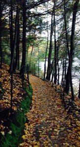 New England path, Walden Pond