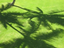 shadows, palm trees, Hawaii