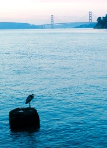 Golden Gate Bridge, egret, foggy morning