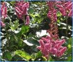 perennials, gardening