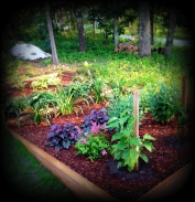 garden, New England