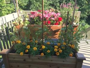 garden, deck garden