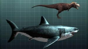 http://www.discovery.com/tv-shows/shark-week/videos/the-nightmarish-megalodon/