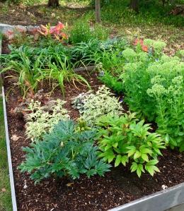 garden, gardeing, watering the garden