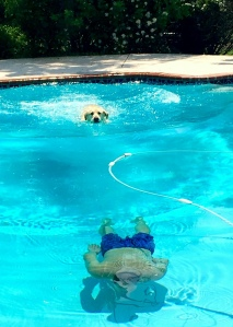 dogs, swimming