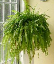 plant, home plants