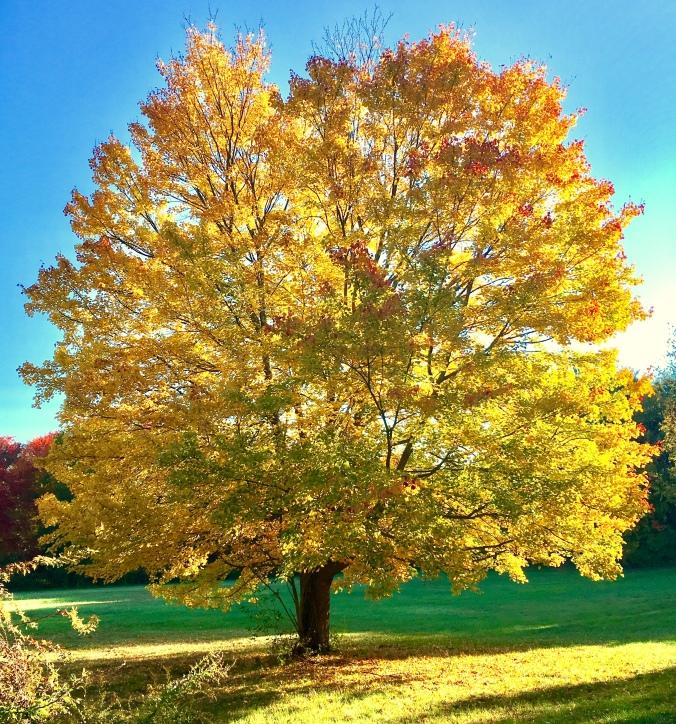 Fall, Autumn, New England Fall