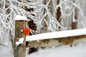 winter photography, Susan Licht