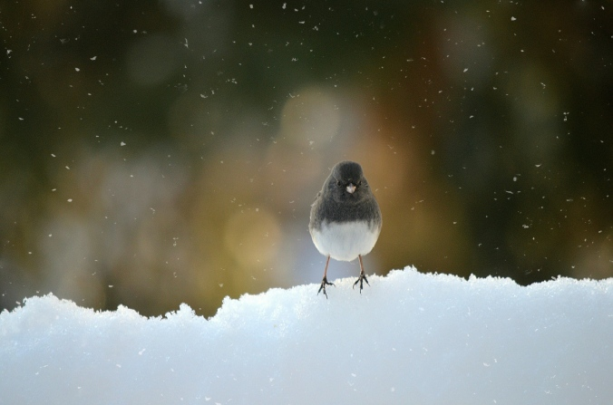winter photography, bird photography, Susan Licht