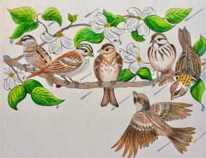 children's book, illustrated book