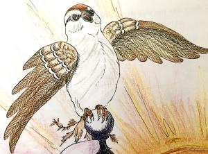 children's book, sparrow