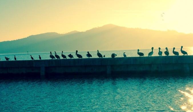 CA weather, NE weather, peligans