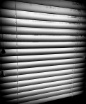 blinds, office,