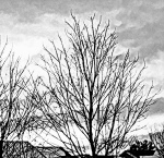 trees, New England, winter