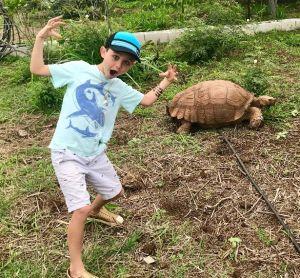 Kauai, Honu, Turtle Sanctuary