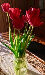 tulips, flowers, Valentine's Day