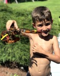 lobster, how to hold a lobster