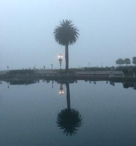 fog, san Francisco bay, palm tree