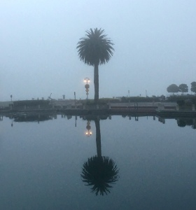 fog, san Francisco bay, palm tree