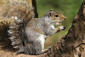 squirrel, animal lover, science fiction