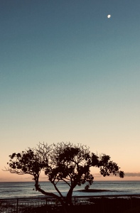 Kauai, moonlit night, magical realism