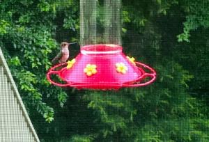 hummingbird, hummingbird feeder, poetry
