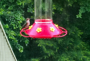 hummingbird, hummingbird feeder, poetry
