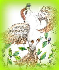 illustration, Birds of Paradise, picture book