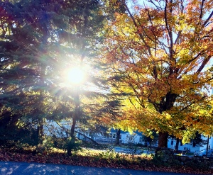 New England fall, sunshine through the trees