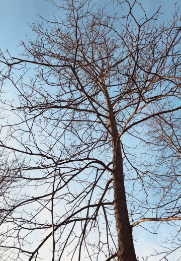 winter, bare branches, trees, blogging