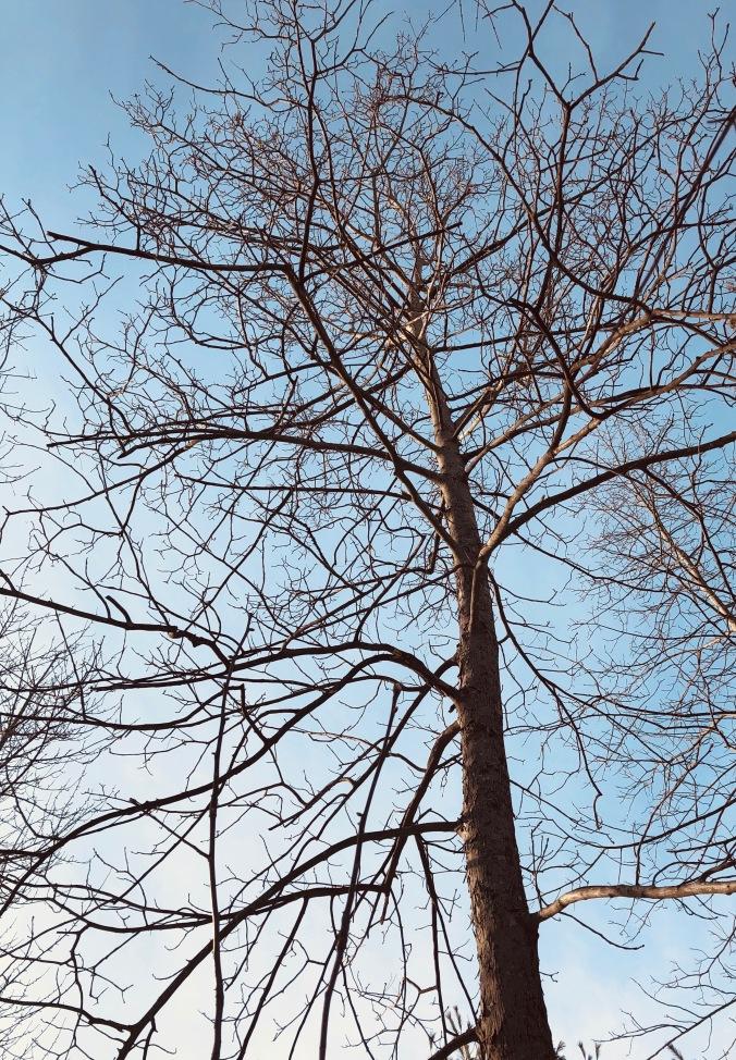 winter, bare branches, trees, blogging
