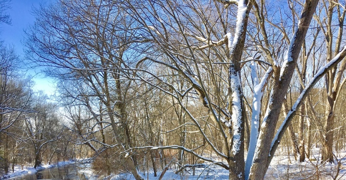 snow, New England, forest, winter trees