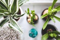 house plants, office plants, pixabay