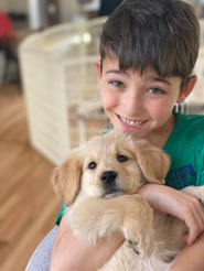 Golden retriever puppy, puppy, happiness is a warm puppy
