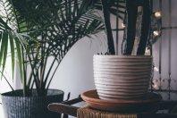 plants, office plants, Pixabay
