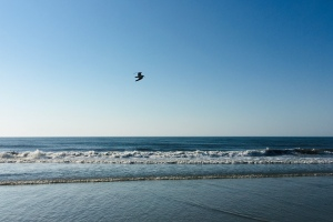seagulls, ocean, ocean flight, seascape