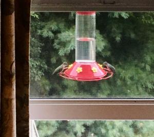 hummingbirds, hummers