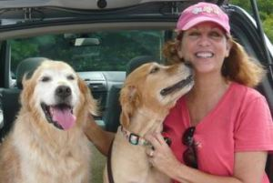 dogs, golden retrievers, best friends