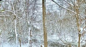 blog snow 1