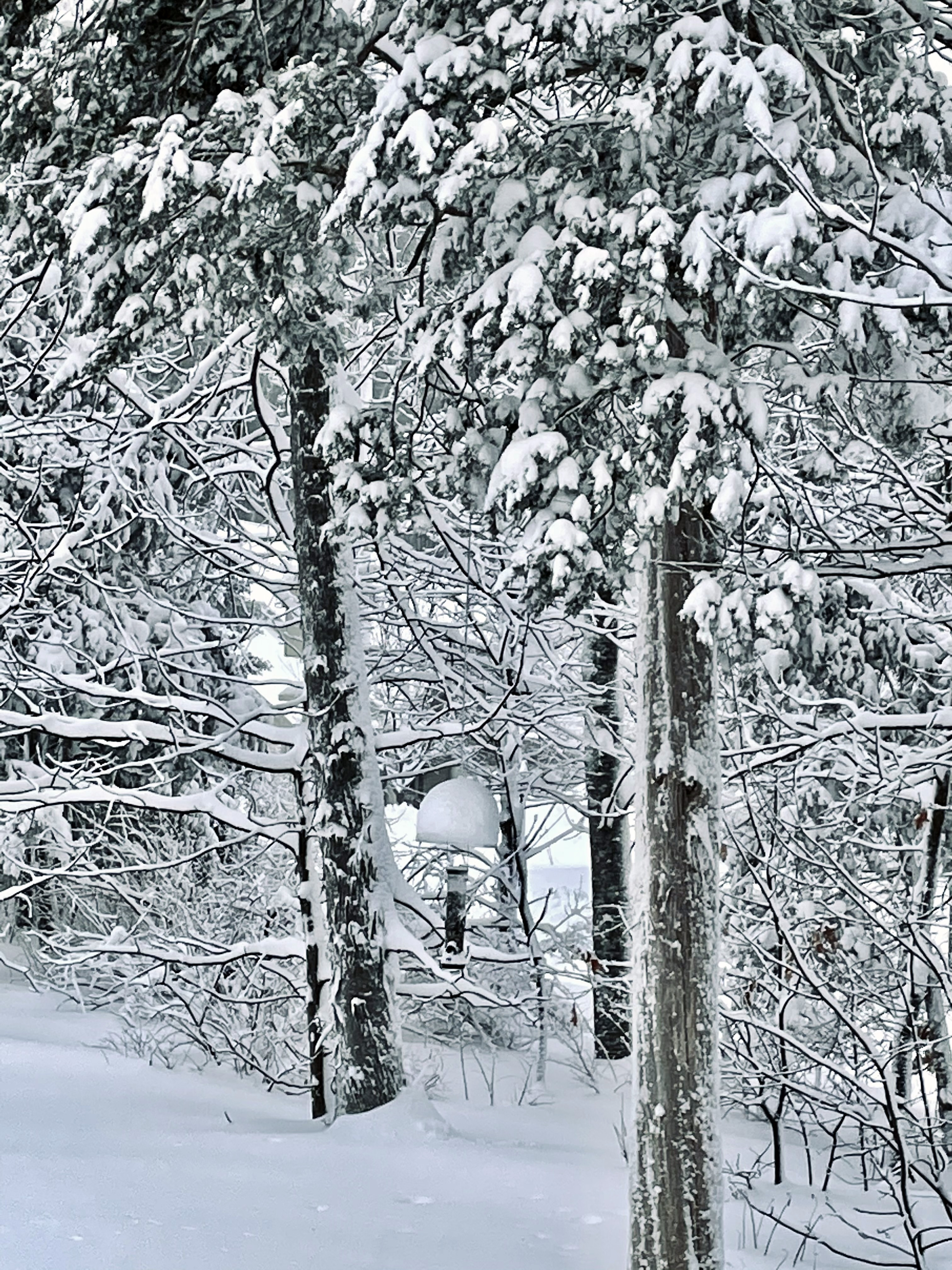 blog-snow-b