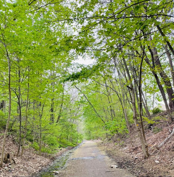 walking, woods, path